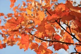 Herbstwald3